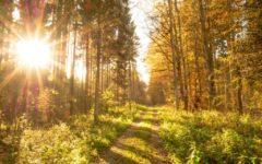 autumn-513783_1280 (1)